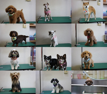 Dogs2_3